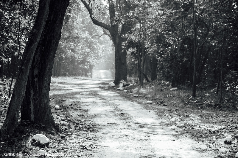 Trail, Rajaji National Park, Uttaranchal, India