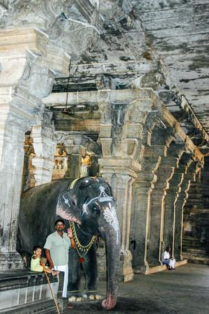 Elephant, Sri Jambukeshwarar Akilandeswari Temple, Thiruvanaikoi