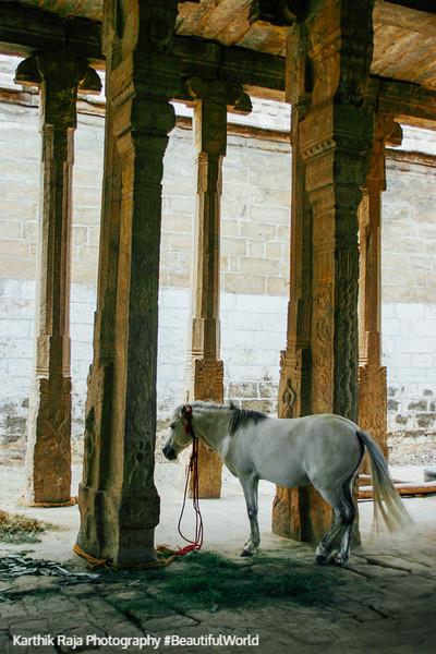 A real horse, Sri Ranganathaaswami Temple, Srirangam, Tiruchirap