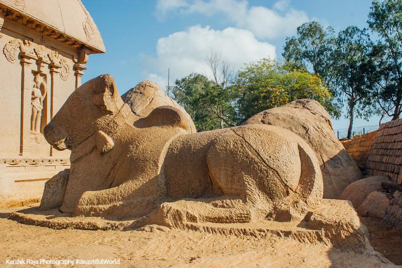 Nandi, Pancha Rathas, Mahabalipuram, Tamil Nadu, India