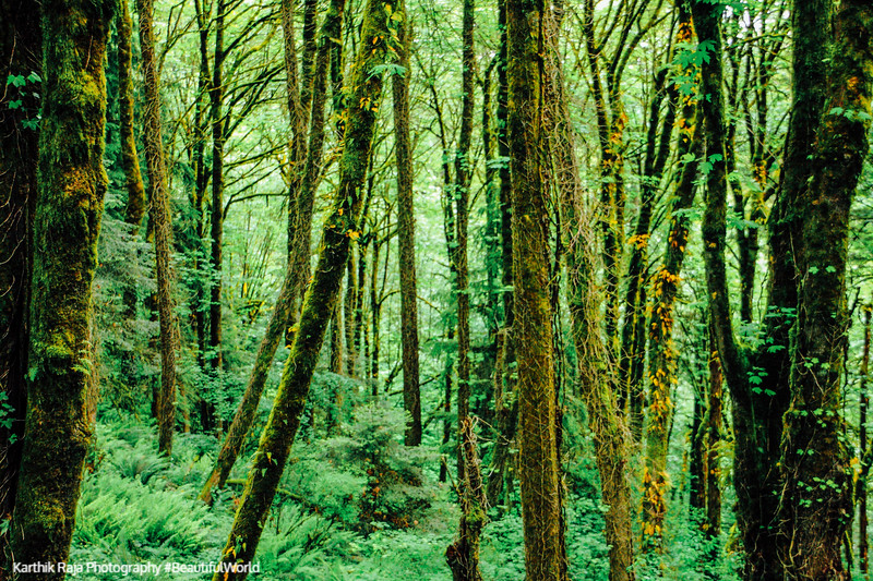 Woods aroun Pittock Mansion, Portland, Oregon
