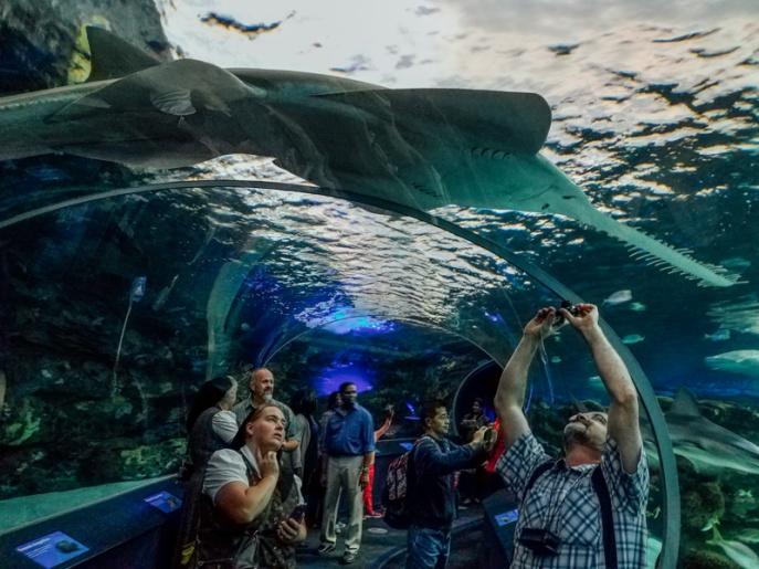 Ripleys Aquarium, Toronto, Canada