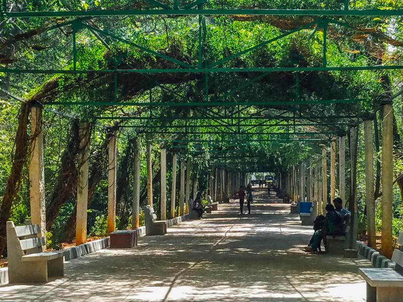Mysore zoo, Karnataka, India