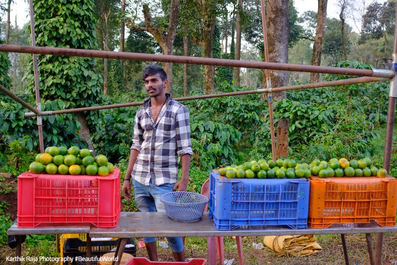 Fresh Oranges, Kodagu District, Karnataka, India