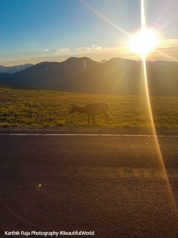 Sunset, elk, Alpine Ridge Trail, Alpine Visitor Center, Rocky Mo