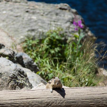 Squirrel, Bear Lake, Rocky Mountain National Park, Colorado