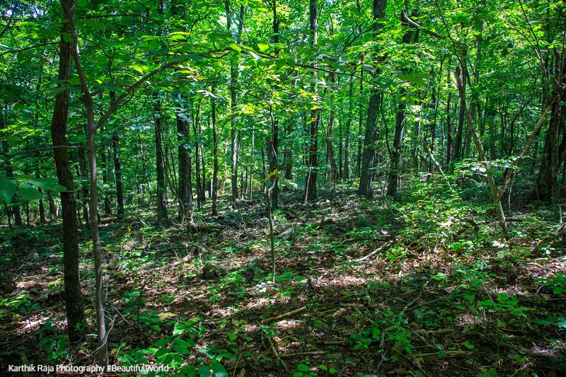 Forest, Fox Hollow Trail, Shenandoah National Park, Virginia