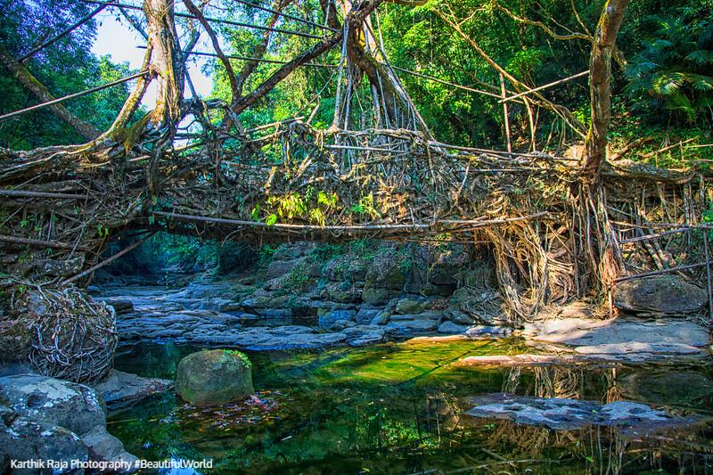 Living Root Bridge, Mawlynnong, Meghalaya