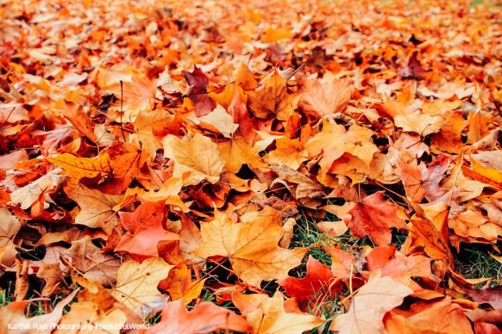 Fall colors, Autumn, Palatine, Illinois
