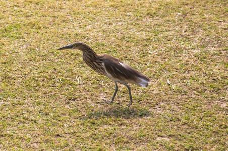 Birds, Gardens, Victoria Memorial, Kolkata, India